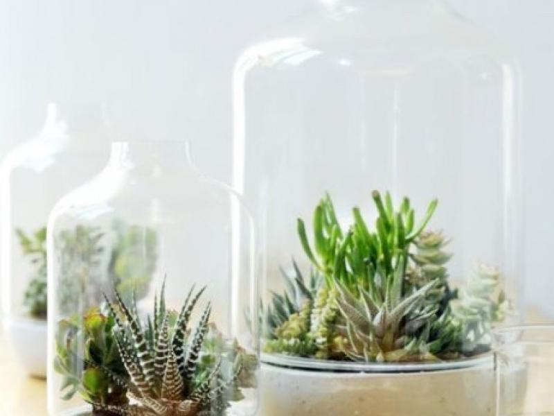Avez-vous déjà entendu parler des compositions florales sous cloche ?