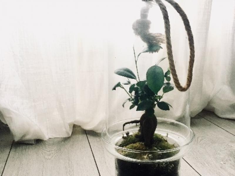 Optez vous aussi pour une composition végétale autonome !